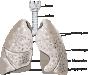 Biofyzika dýchacieho systému