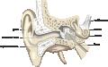 Biofyzika sluchu