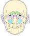 Fyziológia a patofyziológia nosa, jej význam pre funkciu dolných dýchacích ciest