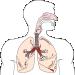 Patofyziológia vonkajšieho dýchania